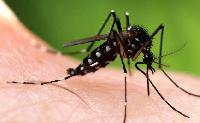 11 lý do để bạn nên diệt muỗi